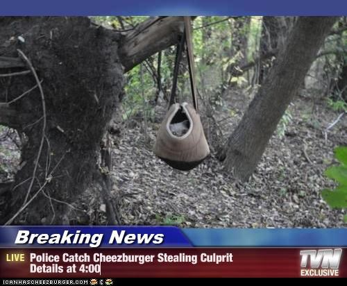Breaking News - Police Catch Cheezburger Stealing Culprit  Details at 4:00