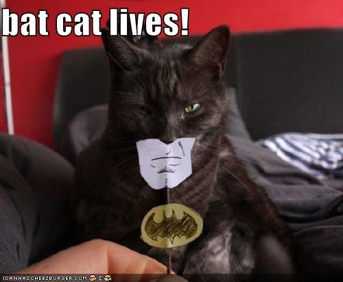 bat cat lives!