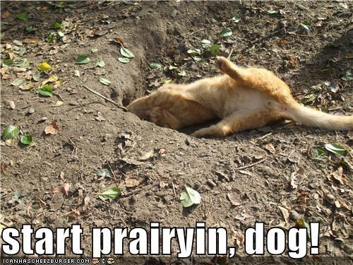 start prairyin, dog!