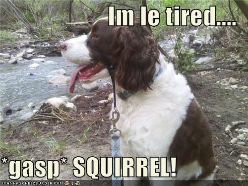 Im le tired....  *gasp* SQUIRREL!