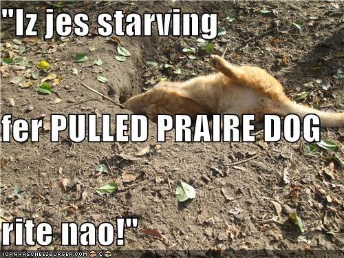 """""""Iz jes starving fer PULLED PRAIRE DOG rite nao!"""""""
