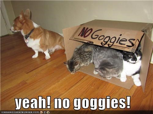 yeah! no goggies!