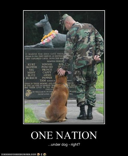 america,dogs,political pictures
