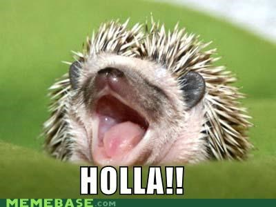 day,end,hedgehog,holla,Memes,over,the h word