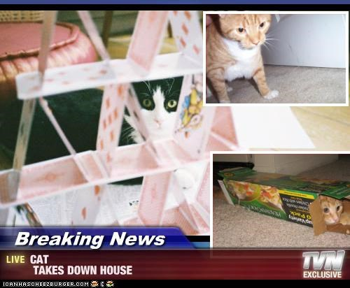 Breaking News - CAT  TAKES DOWN HOUSE