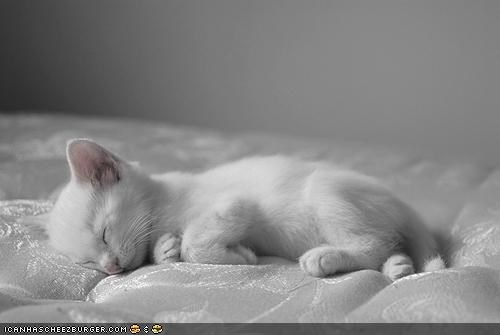 Cyoot Kitteh of teh Day: Mah Sleep Number iz Elebenty