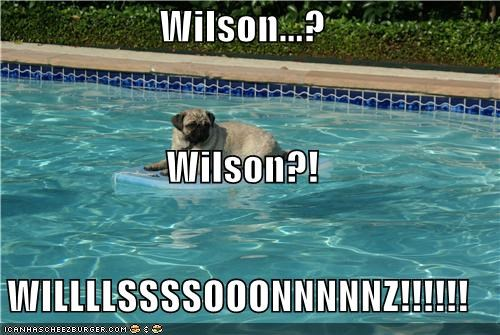 castaway,film,Movie,pool,pug,question,quote,screaming,stranded,swimming pool,tom hanks,wilson