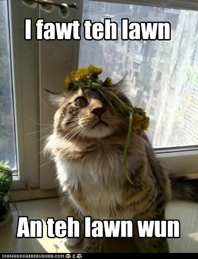 caption,captioned,cat,flowers,fought,i fought the law,law,lawn,lyrics,similar sounding,song,the clash,won