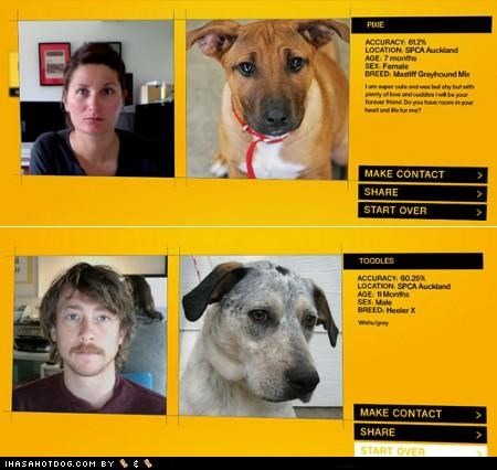 adoptions,appearance,match,pets,pound,service