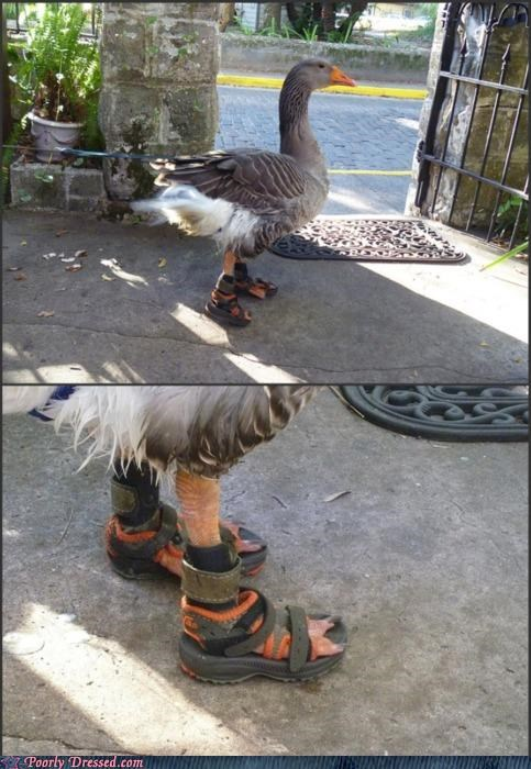 animal,duck,sandals,teva