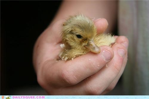 clever,creative,duck,duckling,explanation,name,reader squees,sound,weep,willow