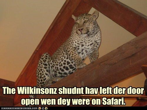 The Wilkinsonz shudnt hav left der door open wen dey were on Safari.