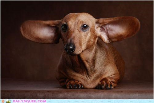 abort,acting like animals,activated,conversation,dachshund,decrypting,dogs,ears,engage,mission,sonar,spying