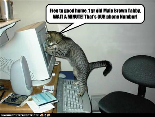 Free to good home, 1 yr old Male Brown Tabby,  WAIT A MINUTE! That's OUR phone Number!