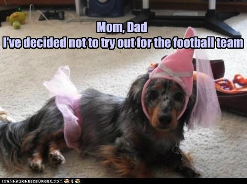 announcement,costume,dachshund,dad,decided,decision,dressed up,football,mom,news,not,princess,team,try,tryout