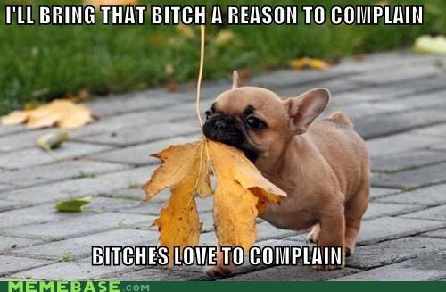 animemes,complain,dogs,Ladies Love,leaves,pug,rude