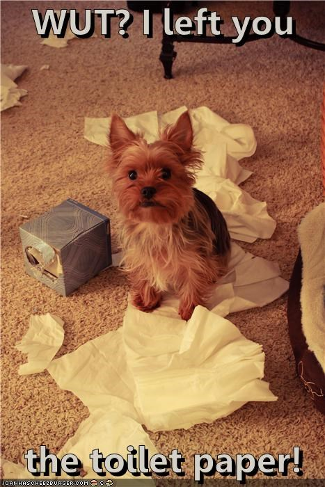 fyi,indignant,kleenex,left,mess,scottish terrier,tissue,tissues,toilet paper,what