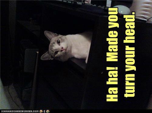 caption,captioned,cat,haha,head,made,sideways,success,trick,turn,win,you