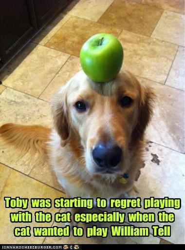 apple,bow and arrows,cat,game,golden retriever,nervous,playing,regret,wanted,william tell,worried
