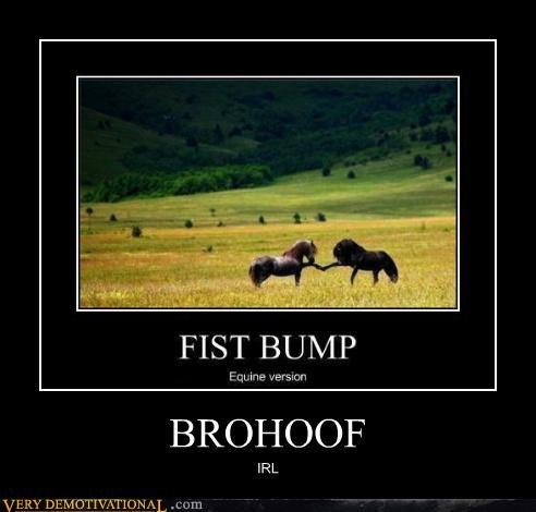 animals,brofist,hilarious,hoof,horses