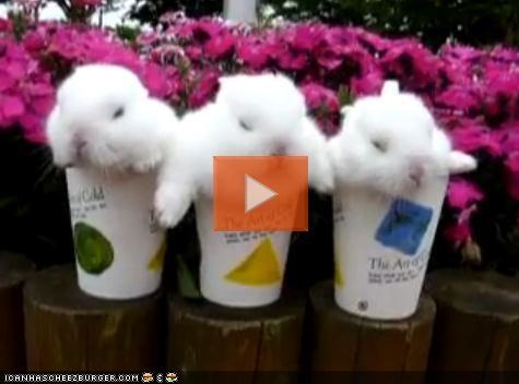 VIDEO: Cyoot Bunnies Sleeping in Cups