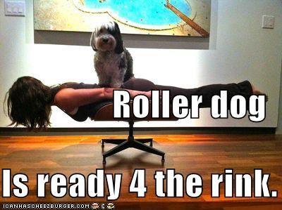 chair,dogs,human,lolwut,mixed breed,ready,rink,roller,roller derby,sheepdog,standing