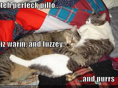 teh perfeck pillo... iz warm, and fuzzey ...and purrs