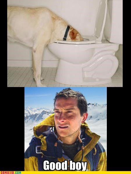 bear grylls,dogs,pee,TV