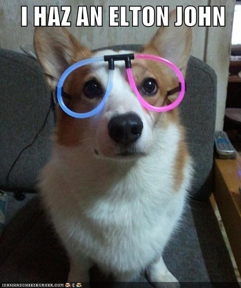best of the week,corgi,dressed up,elton john,glasses,Hall of Fame,i has,imitating,lolwut
