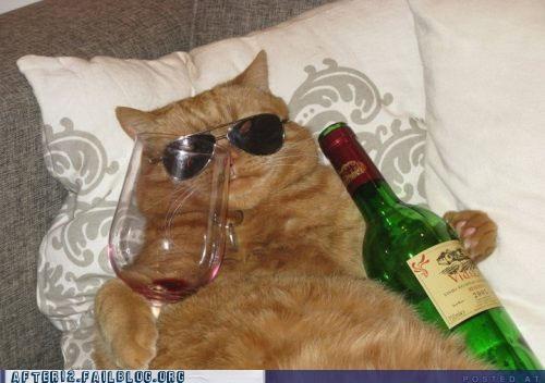 aviators,cat,wine