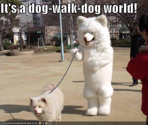 akita,dogs,dog eat dog,leash,mixed breed,phrase,shiba inu,suit,walk,walking,world