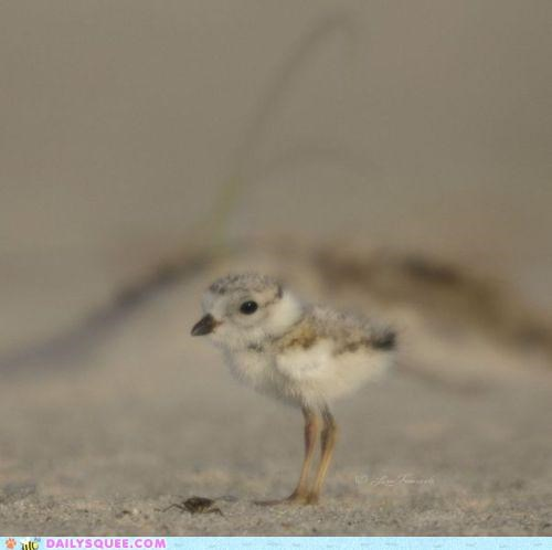 adorable,baby,bird,chick,dainty,definition,immaculate,petite
