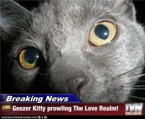 Breaking News - Geezer Kitty prowling The Love Realm!
