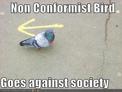 Non Conformist Bird  Goes against society