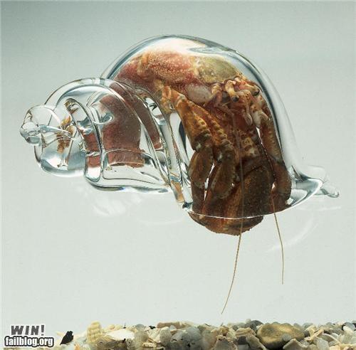 Glass Shell WIN!