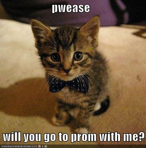 pwease      will you go to prom with me?