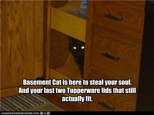 actually,basement cat,caption,captioned,cat,fit,Hall of Fame,here,last,lids,soul,steal,still,tupperware,two