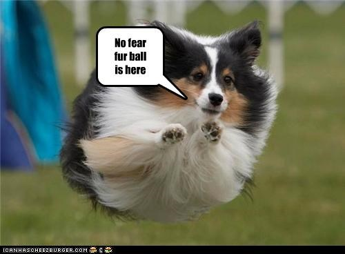 No fear fur ball   is here