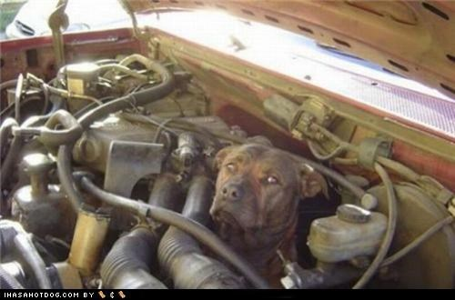 car,engine,mistake,pitbull,whoops