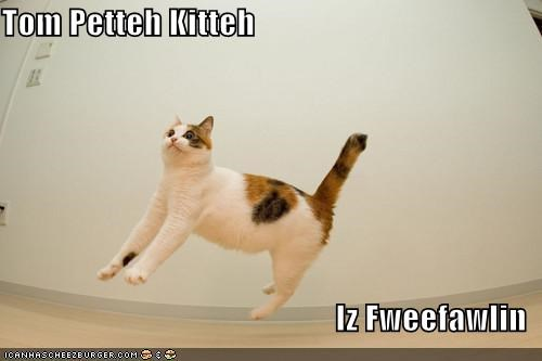 caption,captioned,cat,falling,free,free falling,lyrics,song,Tom Petty