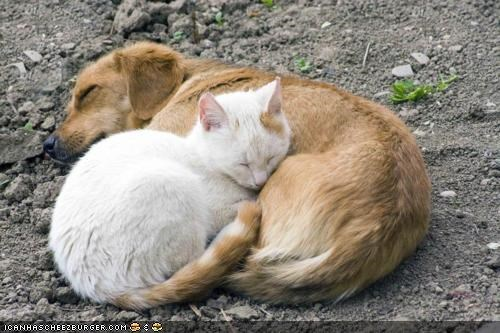 dogs,goggies,goggies r owr friends,heart,Interspecies Love,nap,sleeping