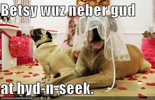 FAIL,good,hide and seek,hiding,mastiff,mixed breed,never,pug,undergarment