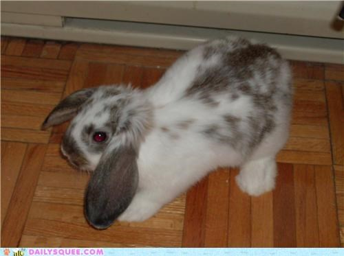 airway,bunny,formula,math,new,plane,pun,rabbit,reader squees
