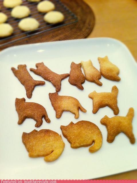 Cats,cookies,crackers,epicute,kitties