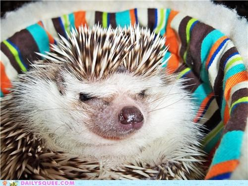 Hedgie is Not Amused