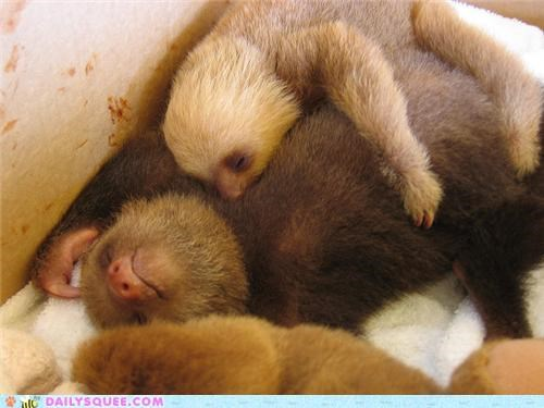 Babies,baby,family,peace,peaceful,resting,sleeping,sloth,sloths,squee spree