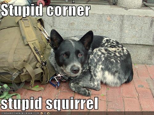 Stupid corner  stupid squirrel
