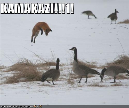 KAMAKAZI!!!1!