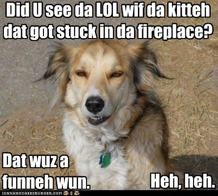 funny,lol,mixed breed,question,remembering,reminiscing,sheltie