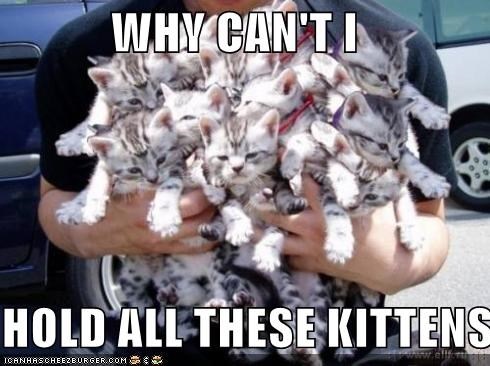 WHY CAN'T I  HOLD ALL THESE KITTENS